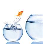 Сlipart Jumping Goldfish Fish Fishbowl Escape   BillionPhotos