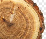 Сlipart Tree Ring Tree Wood Circle Bark photo cut out BillionPhotos