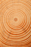 Сlipart Tree Ring Tree Nature Circle Wood photo  BillionPhotos