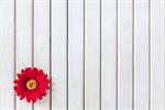 Сlipart white background wood rose flower photo  BillionPhotos