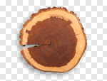 Сlipart Tree Ring Log Wood Circle Cross Section photo cut out BillionPhotos