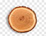 Сlipart Tree Tree Ring Log Portion Wood photo cut out BillionPhotos