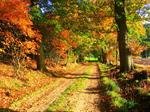 Сlipart Forest Autumn Nature Tree Woods photo free BillionPhotos