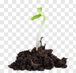 Сlipart Seedling Plant Growth Green Isolated photo cut out BillionPhotos
