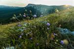 Сlipart Colorado Boulder Mountain Mountain Range Forest photo  BillionPhotos