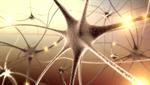 Сlipart Brain Nerve Cell Human Nervous System Cell Synapse 3d  BillionPhotos