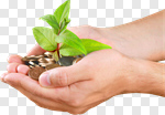 Сlipart Currency Tree Human Hand Money Tree Plant photo cut out BillionPhotos
