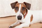 Сlipart pet animal dog care cure photo  BillionPhotos