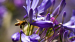 Сlipart Bee Flower Honey Honey Bee Flying photo  BillionPhotos