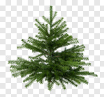 Сlipart Tree Christmas Fir Tree Spruce Tree Isolated 3d cut out BillionPhotos