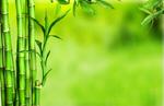 Сlipart Bamboo Tropical Rainforest Backgrounds Green Leaf   BillionPhotos