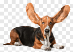 Сlipart Basset Hound Dog Humor Puppy Close-up photo cut out BillionPhotos