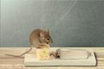 Сlipart Risk Mousetrap Mouse Humor Danger   BillionPhotos
