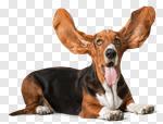 Сlipart Basset Hound Dog Humor Puppy Close-up photo cut out BillionPhotos