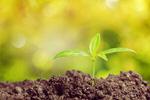 Сlipart Growth Seed Plant Seedling Bud   BillionPhotos