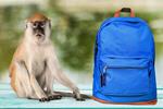 Сlipart backpack bag school red student   BillionPhotos
