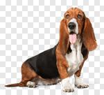 Сlipart Dog Basset Hound Puppy Sadness Depression photo cut out BillionPhotos
