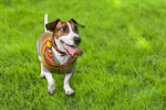 Сlipart ill illness aid pet animal   BillionPhotos