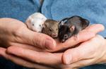Сlipart gerbil gerbils pets rodent trust photo  BillionPhotos
