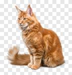 Сlipart dream lion cat leader transformation photo cut out BillionPhotos