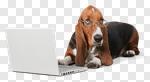 Сlipart Dog Computer Pets Shopping Animal photo cut out BillionPhotos