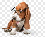 Сlipart Dog Glasses Humor Intelligence Animal photo cut out BillionPhotos