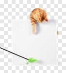 Сlipart cat reaching sign ginger pet photo cut out BillionPhotos