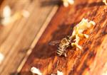 Сlipart Bee Honey Bee Honey Manual Worker Development photo  BillionPhotos