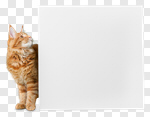 Сlipart cat banner isolated around pets photo cut out BillionPhotos