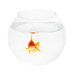 Сlipart Fishbowl Goldfish Fish Single Object Glass photo  BillionPhotos