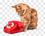 Сlipart contact retro cat poster phone photo cut out BillionPhotos