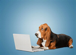 Сlipart dog business laptop clever pet   BillionPhotos