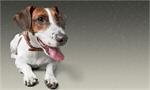 Сlipart pet animal first dog care   BillionPhotos