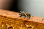Сlipart Bee Honeycomb Beehive Queen Bee Honey photo  BillionPhotos