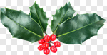 Сlipart Holly Christmas Ornament Christmas Branch Christmas Decoration photo cut out BillionPhotos