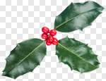 Сlipart Christmas Holly Leaf Berry Isolated photo cut out BillionPhotos