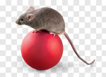 Сlipart Christmas Mouse Animal Pets Holiday photo cut out BillionPhotos