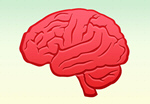 Сlipart Brain Vector Illustration and Painting Human Internal Organ Cerebellum   BillionPhotos