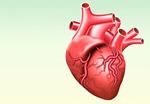 Сlipart Human Heart Anatomy Healthcare And Medicine Human Internal Organ Vector   BillionPhotos