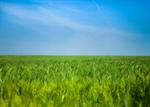 Сlipart Sky Grass Field Blue Cloud photo  BillionPhotos