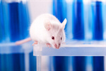 Сlipart Mouse Laboratory Animal Testing Animal Science photo  BillionPhotos