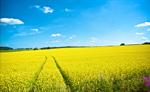 Сlipart Wind Turbine Energy Yellow Field Air photo  BillionPhotos
