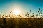 Сlipart Sunrise Landscape Alberta Prairie Spring photo  BillionPhotos