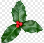 Сlipart Holly Christmas Leaf Isolated Decor photo cut out BillionPhotos