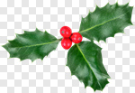 Сlipart Holly Christmas Christmas Decoration Leaf Berry photo cut out BillionPhotos