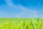 Сlipart Panoramic Field Wheat Prairie Scenics photo  BillionPhotos