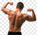 Сlipart Body Building Muscular Build Human Muscle Weight Training Back photo cut out BillionPhotos