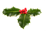Сlipart Holly Christmas Holiday Christmas Decoration Berry photo  BillionPhotos