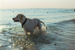 Сlipart Dog Beach Travel Summer Vacations photo  BillionPhotos