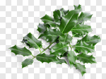 Сlipart leaf leafs holly christmas branch photo cut out BillionPhotos